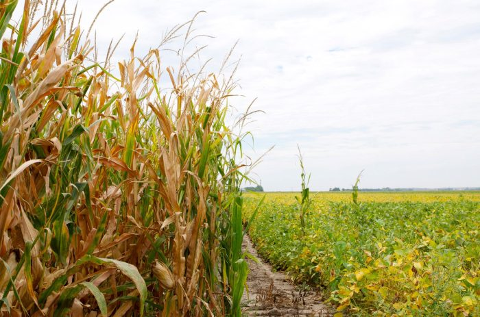 Corn and Soybeans over Labor Day Weekend